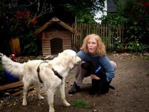 Wikkegaards Welpen Daja und Emil, zwei werdende Schulhunde