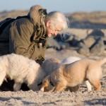 ausflug mit Hundewelpen an den Strand von Klitmöller in der Nähe Wikkegaards.