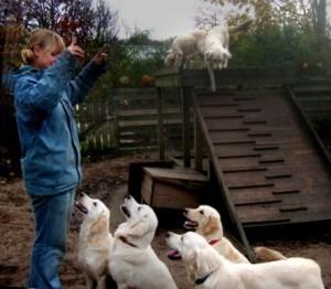 Wikkegaards Praktikantin Annika beim Training mit Therapiehunden. Foto: M.Weiler