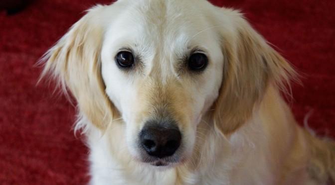 Tiergestützte tiefenpsychologische Psychotherapie, Ein Bericht aus der Praxis