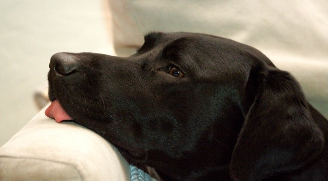 Eignungstest als Voraussetzung für den Einsatz eines Hundes in tiergestützter Arbeit?