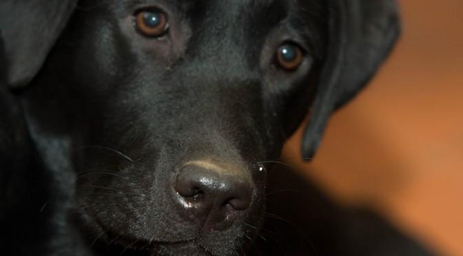 Schneckennase – Hundenase – das Prinzip ist geblieben