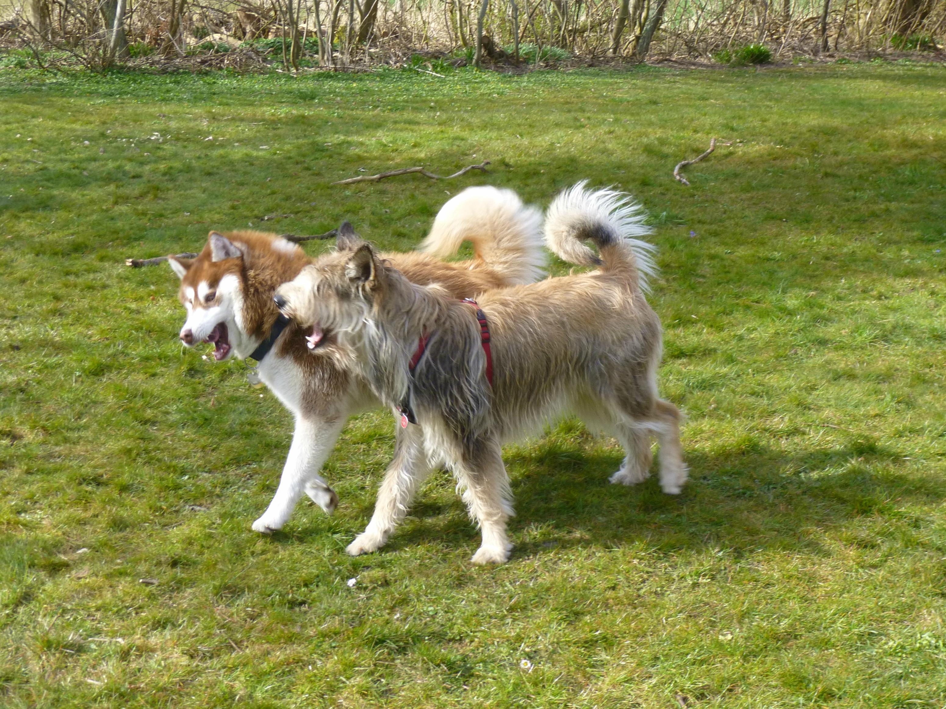 Meine zwei Hunde haben nicht nur ausgesprochen nette und ansprechende ...