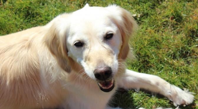 Neu und u.a. auch über Wikkegaard erreichbar: Das Forum für Hundegestützte Psychotherapie!
